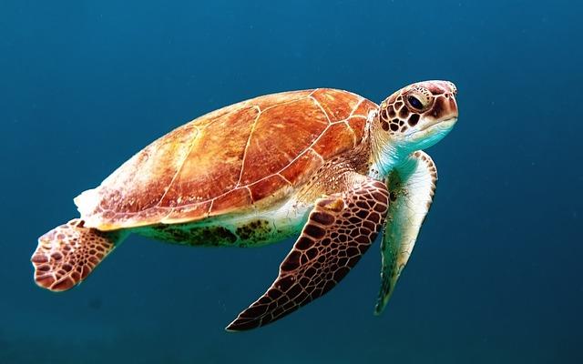 Morská korytnačka.jpg