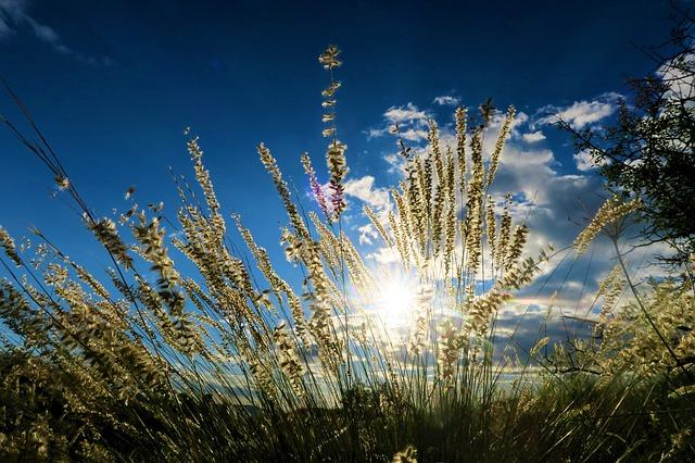 Príroda, kvety, bylinky.jpg